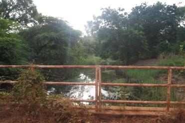 Jungle near Toubacuta