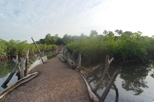 Mangroves in a Mandinari village