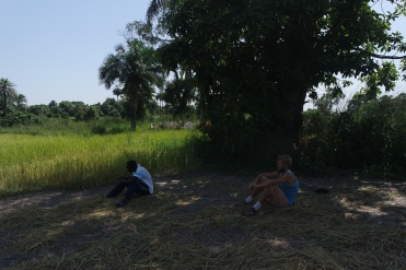 Gambian countryside