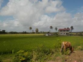 256 Rice Fields